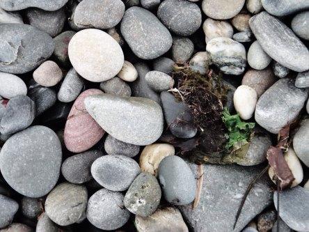 Renvyle's Stony Beaches