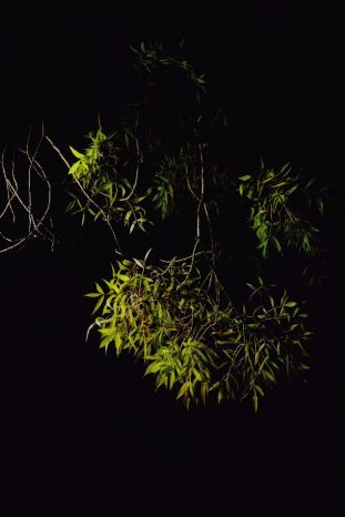 Foliage by lamplight